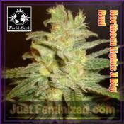 Northern Lights x Big Bud feminized outdoor cannabis seeds